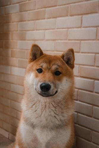 อาหารสุนัขเกรดพรีเมี่ยม ราคา ประหยัด